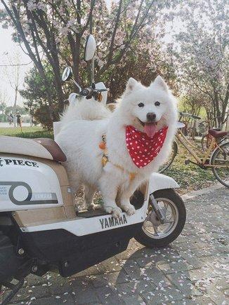 犬犬交流群