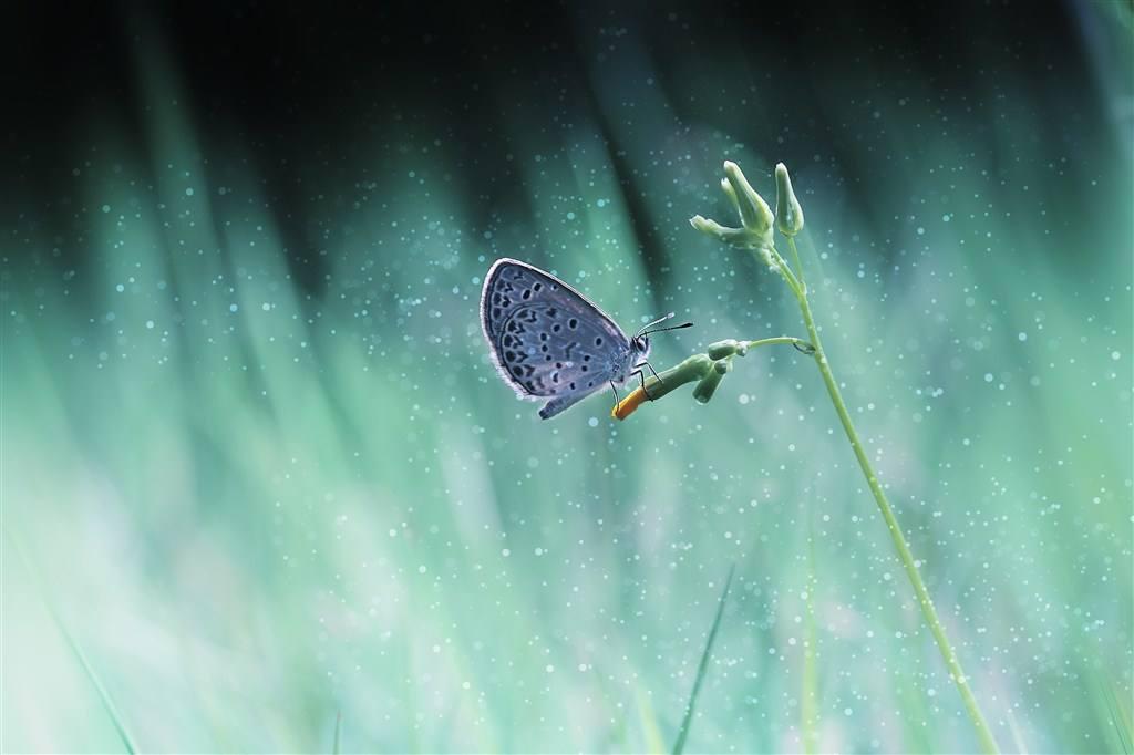 蓝蝴蝶唯美群