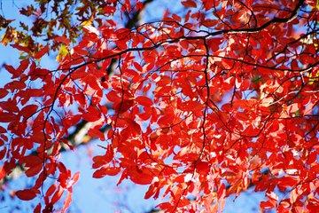 红树枫叶交流群
